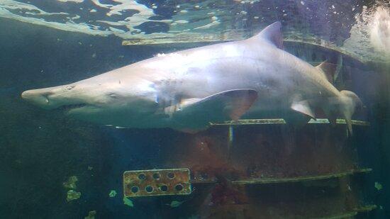 Grand aquarium de Saint-Malo (3)