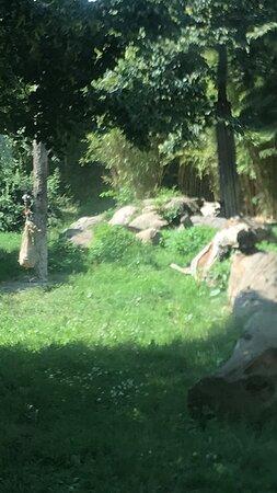 Zoo Leipzig Tierpark Tiergarden zoologická záhrada