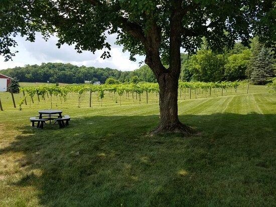 Forestville Vines