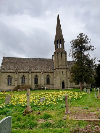 Daffodils in the graveyard