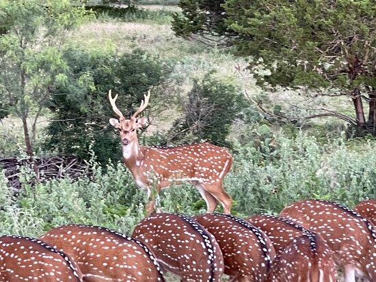 some of the abundant wildlife