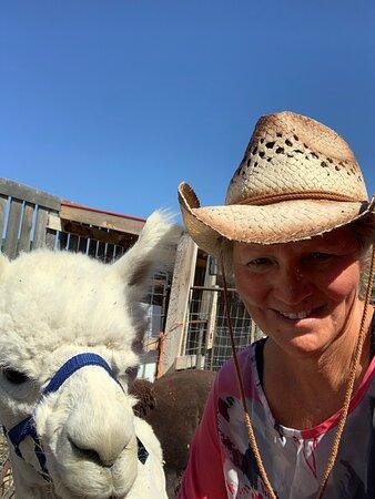 Sylvester our alpaca at Grotto Gardens