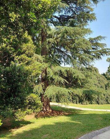 Besana in Brianza, Itália: Piante al parco di villa Filippini