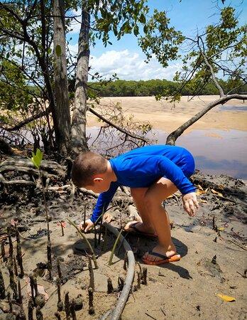 Barra do Camaratuba, PB: Criança contribuindo com a natureza.