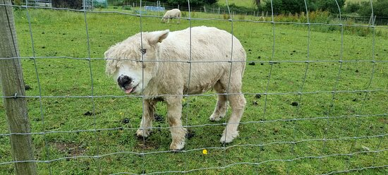 Alpaca my bags for another trip soon!
