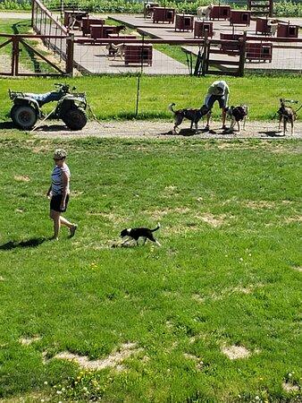 Les chiens s'apprêtent à courir 1
