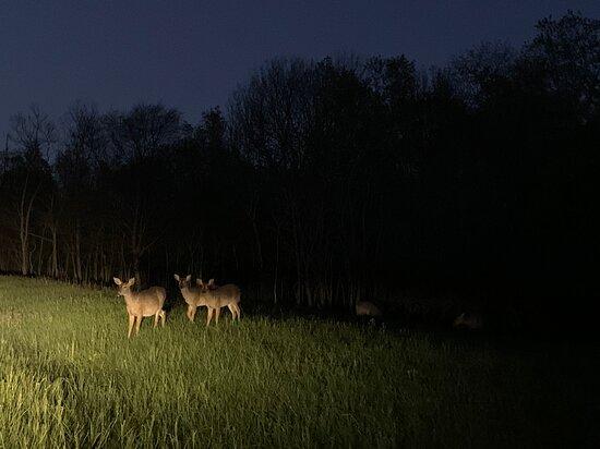 Deer at twilight