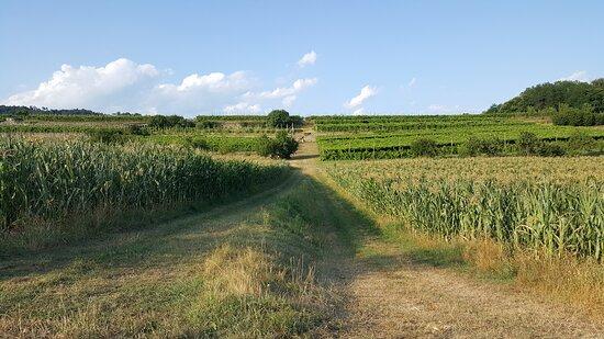 Panorama - Vigne / Campi.