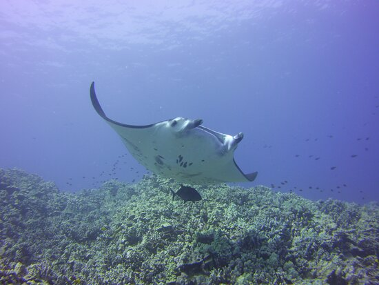 Pacific Scuba Divers