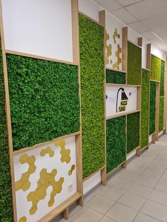 Our reception: fito wall from natural moss