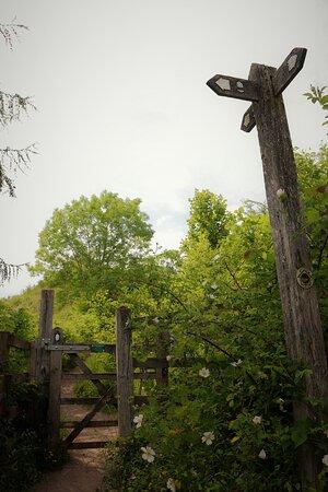 6.  Llanymynech Rocks Nature Reserve, Llanymynech