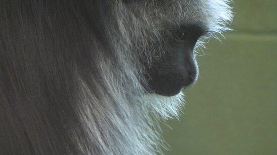 Paignton Zoo Environmental Park