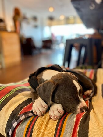 Dog-friendly inside with pup treats to purchase
