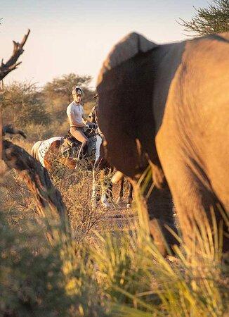 Tuli Safari and African Explorer in Botswana