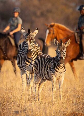 Horse riding with zebra on the African Explorer and the Signature Safari in South Africa