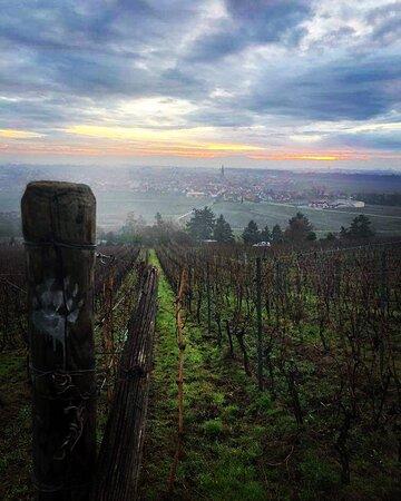Le vignoble vu sur Dambach-la-Ville