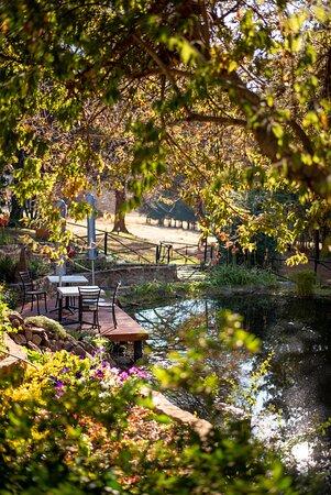 Crisp morning light on our pond deck