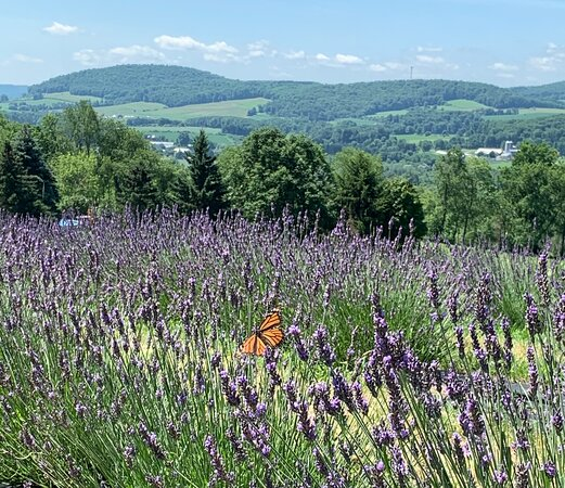 Hillcrest Lavender Farm,LLC