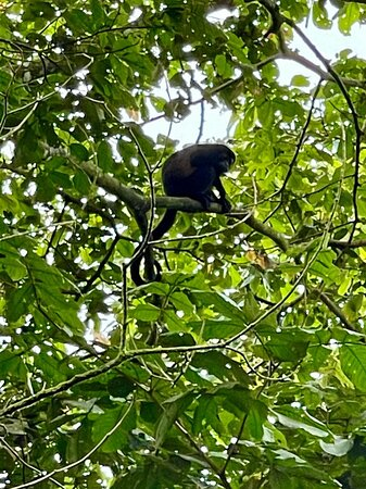 La Fortuna de San Carlos, Costa Rica: Are you thinking to visit Arenal area?  If you have to enjoy Arenal area without paying too much, let me tell you that I have the best option for you and your family or friend...  My nombre is Michael López, I work as tour guide everything you need to love more Costa Rica I have here and it is not expensive..  Michaeljose.lu@gmail.com  LinkedIn: Maycol López  Whatsapp +506 63106730  https://sites.google.com/view/daydreamer-travel/home