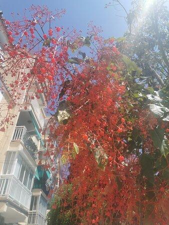 Rincon de la Victoria, Spain: Flores originales.