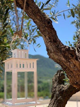 Vista desde nuestro olivo.  La terraza de Fonda Aparicio por el día disfruta de las maravillosas vistas a las montañas y por las noches se torna acogedora a la luz de las velas. Todo acompañado de música ambiente.
