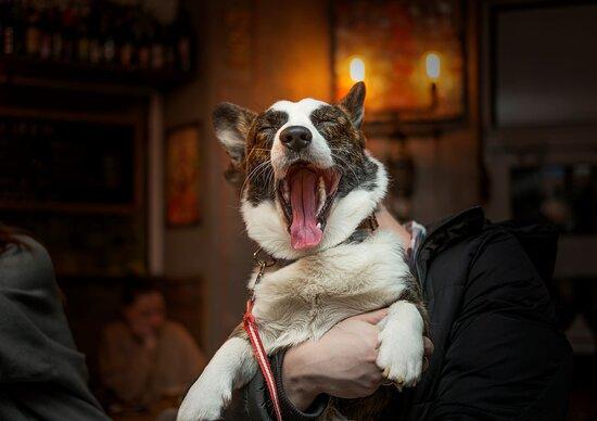 мы очень любим собак we are dog friendly bar