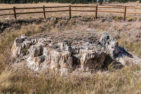 Petrified Stump along the Petrified Forest Trail