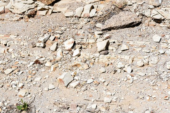 Layered Fossil Bearing Rock