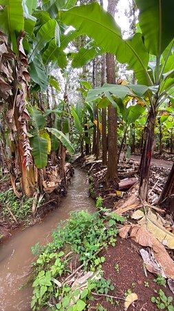 Chagga Villages in Mount Kilimanjaro Cycling Day Trip: Banana plantations