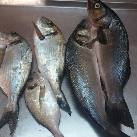 Fresh fish!!!