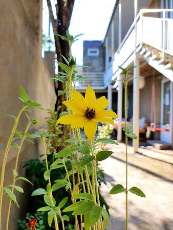 Sunflower in Sunhome🌞
