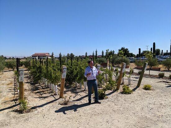 Vineyard tour guide