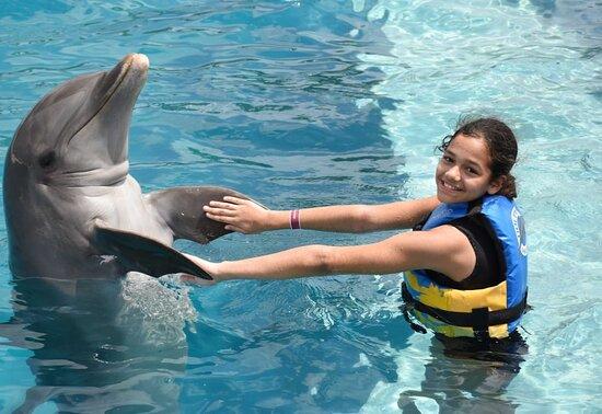 Dolphin Emotion