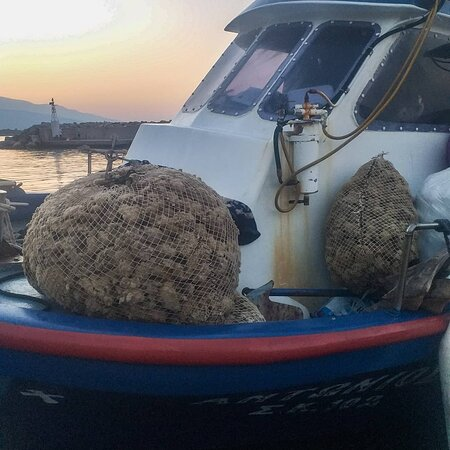 Stomio, Greece: Υπάρχουν σφουγγάρια και στ περιοχή μας