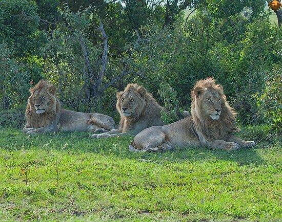 Epic weekend sightings in Amboseli National Park in Kenya