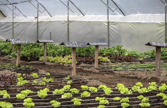 Bajos del Toro, Costa Rica: Organic Farm