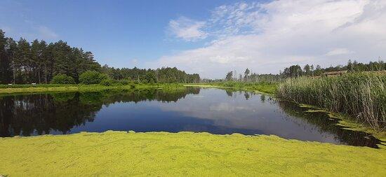Заболоченное озеро у центральной усадьбы