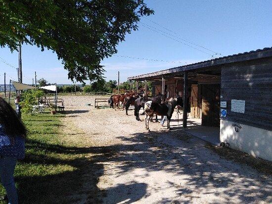 Brugnac, France: Préparation des chevaux avant le départ.