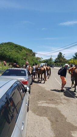 Hoseback riding in Ocho Rios