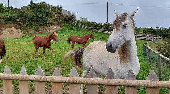 cavalos da quinta
