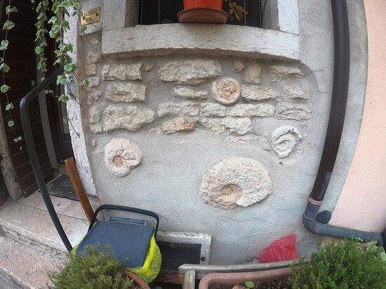 fossili di ammoniti utilizzate per la costruzione e la decorazione degli edifici