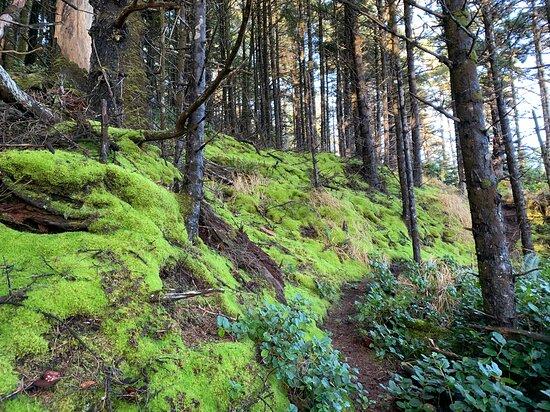 Beautiful mosses near start of the trail