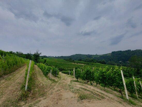 Azienda Agricola Runchet