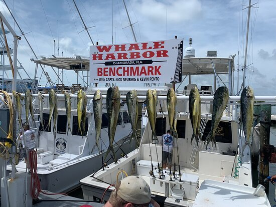 Went out with Capt Scott and first mate Ryan on July 7th.  Had some rough water but powered through to catch 30 Mahi. Put us right on to the fish we got maximum return for our efforts.  It was a great day a family fishing and making memories.  100% recommended!!!