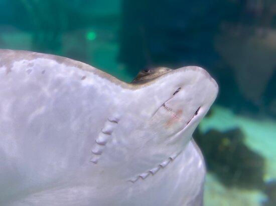 Houston Interactive Aquarium and Animal Preserve