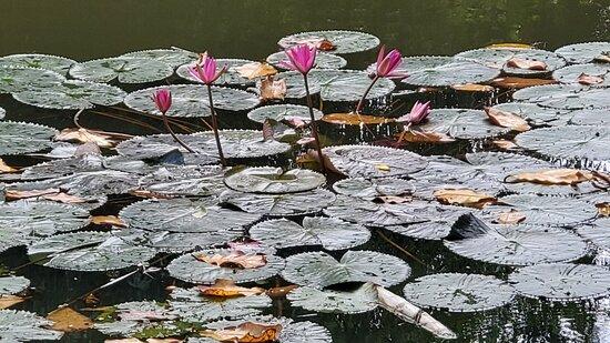 Colombo, Sri Lanka: Nawala Weli Park