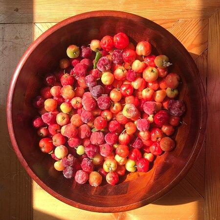 園區內的美白聖品!叫做西印度櫻桃。含有超多的維他命C,每年的夏天靠這棵樹!皮膚根本不會黑。我都採收下來打成果汁,兩個兒子也很愛喝🥰
