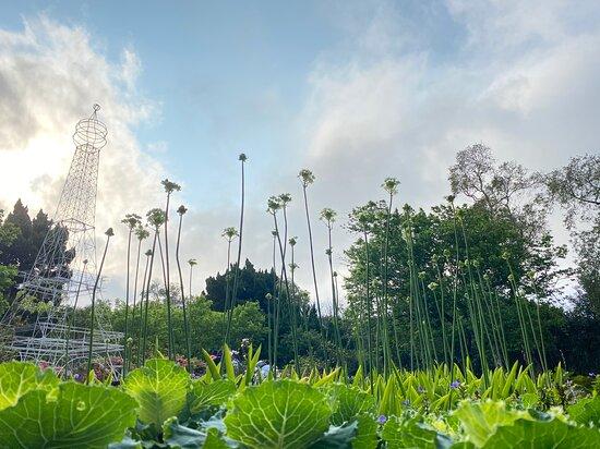 花卉試驗中心 ─ 有台北後花園之稱更是婚攝的熱門場景