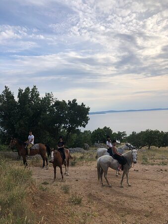 The entire trail is walked and not run by the horses with your guide setting the tempo and order of the group as well as explaining all the historic and nature sights of the area.