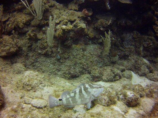 Roatan, Honduras: Fish!